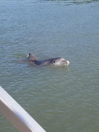 Fort Pierce, FL: Dolphin checking us out.
