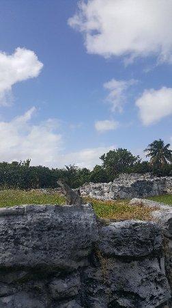 Ruines El Rey (Zona Arqueologica El Rey) : 20180211_131007_large.jpg
