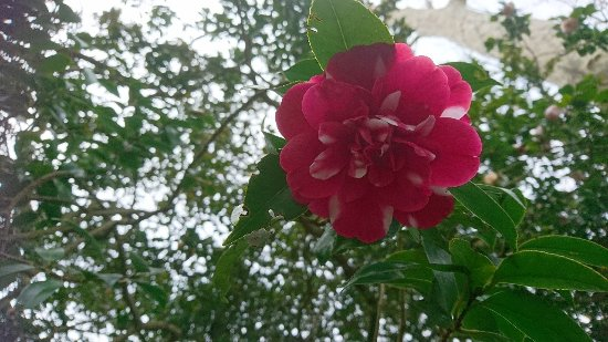 Palheiro Gardens: DSC_0460_large.jpg