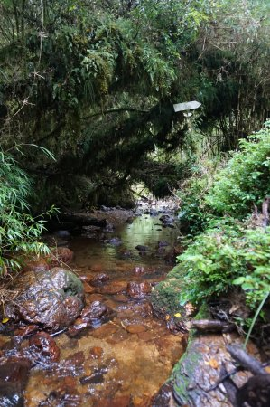 Ancud, Chile: Chepu forest