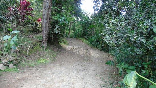 Chirripo National Park, كوستاريكا: DSC01771_large.jpg