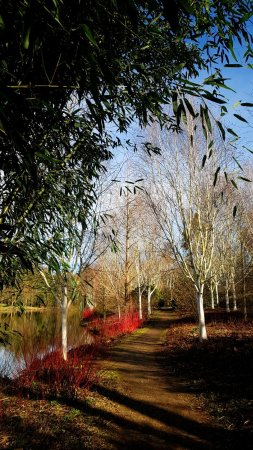 Marks Hall Gardens and Arboretum: Millennium Walk