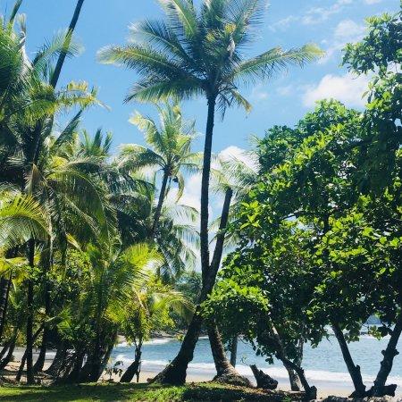 Drake Bay, Costa Rica: Lunch break on the playa juancito