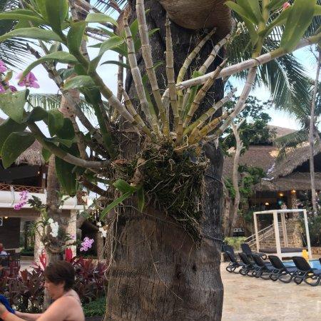 Viva Wyndham Dominicus Beach: photo1.jpg