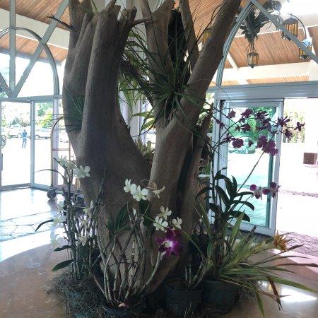 Gamboa Rainforest Resort: photo4.jpg