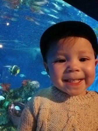 Aquarium of Niagara: IMG_20180217_122410541_large.jpg