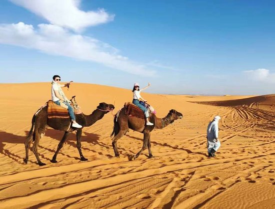 Camel Ride Tours