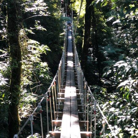 Rotorua Canopy Tours Photo