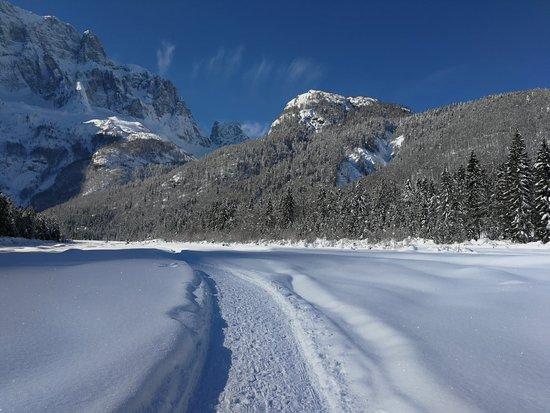 Saisera Wild Track
