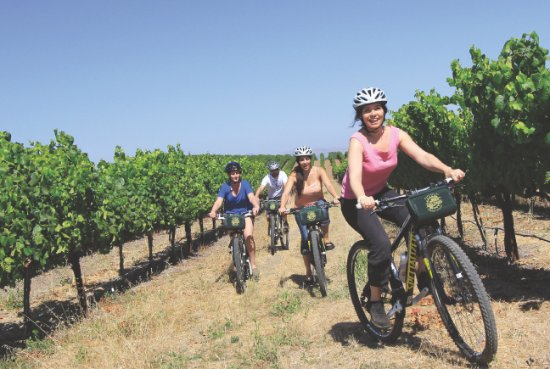 Sonoma, CA: Ride off-road through the vineyards: Cycling IN the Vineyards Tour