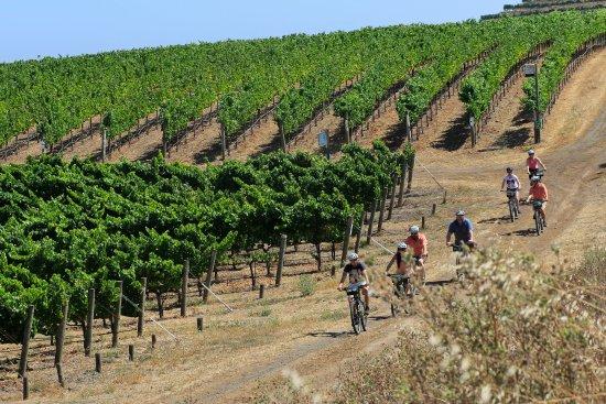 Sonoma Ca Bike Wine Tours