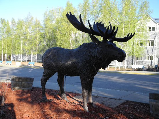 Fairbanks Princess Riverside Lodge: Static display of Moose in front of lodge.