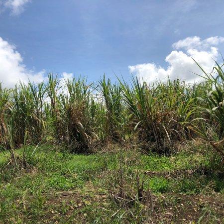 Saint Peter Parish, Barbados: photo6.jpg
