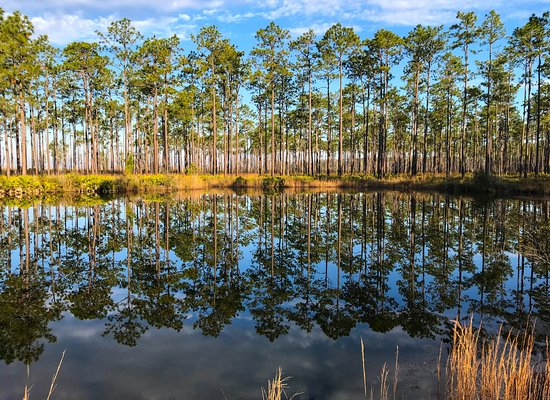 Folkston, GA: Beautiful pond off of Swamp Island Drive