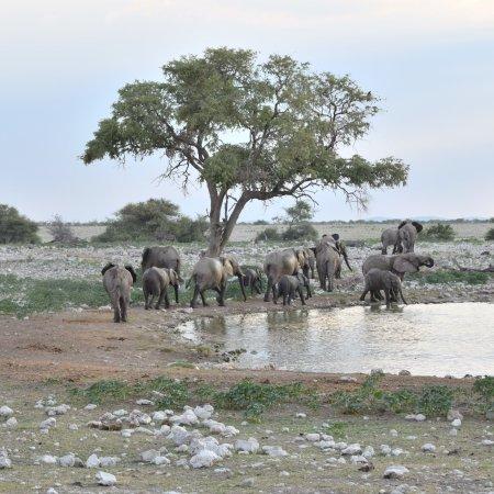 Etosha National Park, Namibia: photo1.jpg