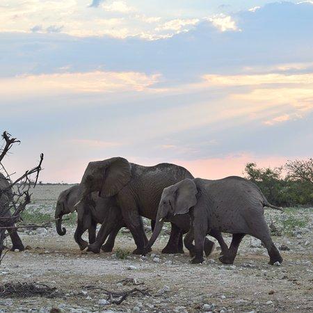 Etosha National Park 이미지