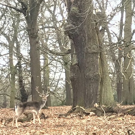 Richmond Park: photo0.jpg