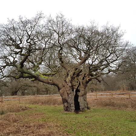 Richmond Park: photo2.jpg