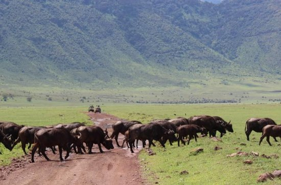 4 Day Safari tour to Ngorongoro ...