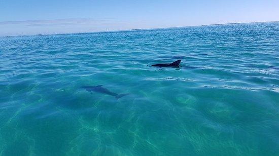 Dolphin Safari : 20180217_162558_large.jpg