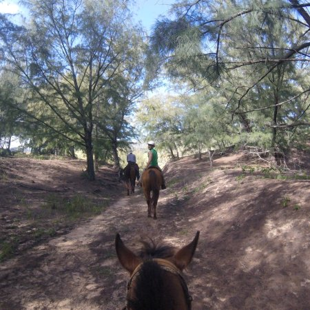 CJM Country Stables: photo0.jpg