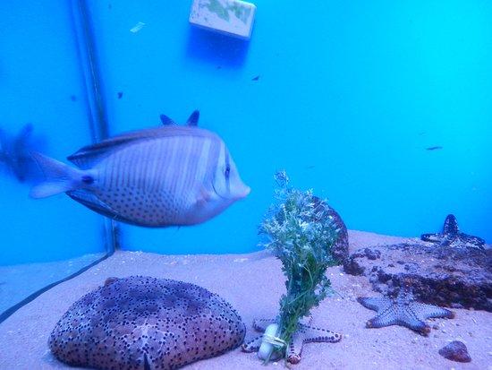 Abyss Marine Aquarium Picture Of Abyss Marine Aquarium Verna