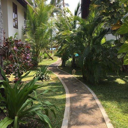 Rekawa, Sri Lanka: photo3.jpg