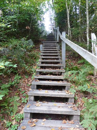 Tiverton, Canada: Stairs on the way back from the rock