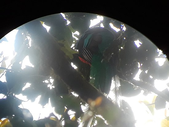 Monteverde Cloud Forest Reserve, Costa Rica: A quetzal through the binocular lens