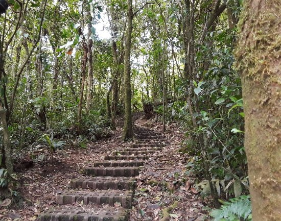 Monteverde Cloud Forest Reserve, Costa Rica: The path