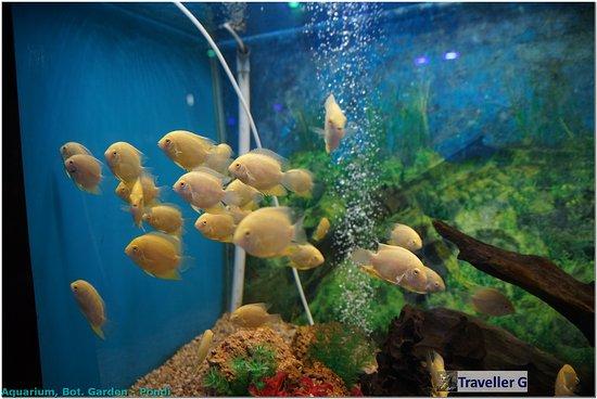 Pondicherry botanical gardens indien anmeldelser for Aquarium botanic