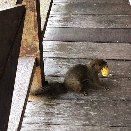 Permai Rainforest Resort: photo3.jpg