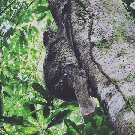 Permai Rainforest Resort: photo4.jpg
