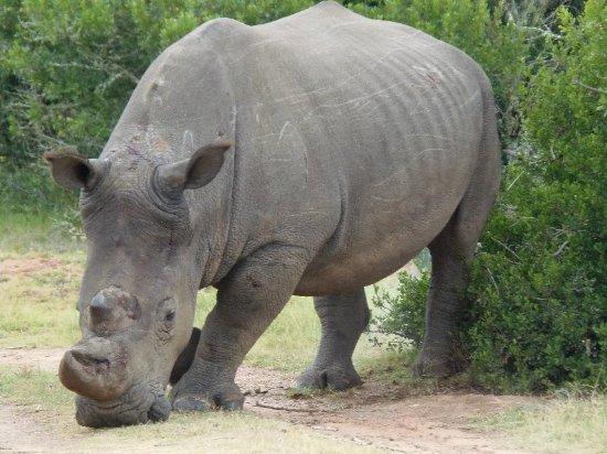Sidbury, Sydafrika: P1272160_large.jpg