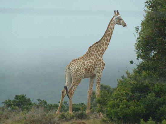 Sidbury, Sydafrika: P1272133_large.jpg