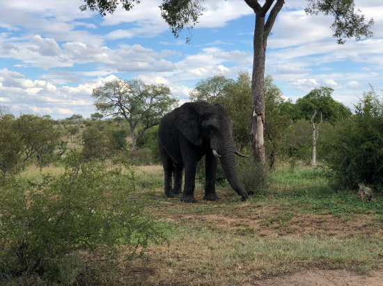 Manyeleti Game Reserve, África do Sul: Elephant visiting the camp