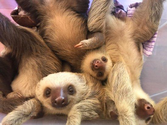 Cahuita, Costa Rica: Hanging out in the NICU/Nursery