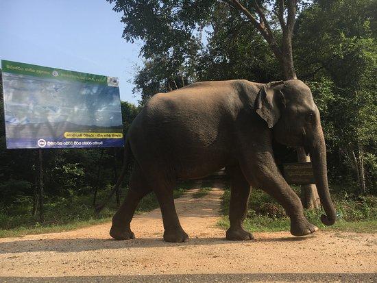 Ciao Sri Lanka