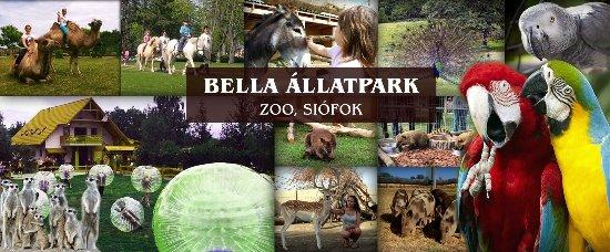 Siofok, Hungary: Bella Állatpark Vadaspark, állatkert, kisállatkert Siófok
