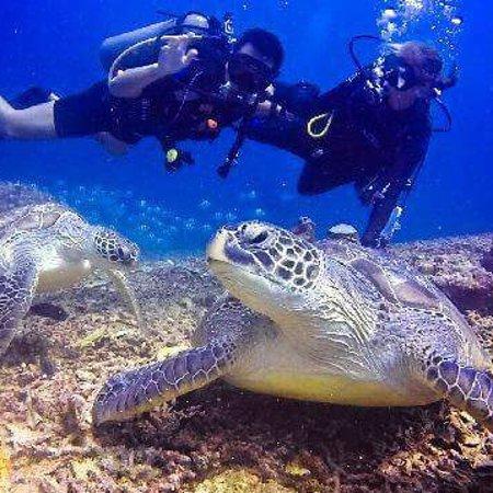Manta Dive : photo0.jpg
