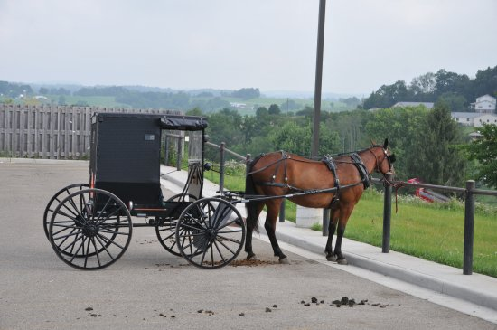 Amish Country: Tipica carrozza Amish