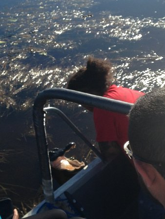 "Buffalo Tiger's Airboat Tours : Junior, our guide ""speaks"" with the alligator"