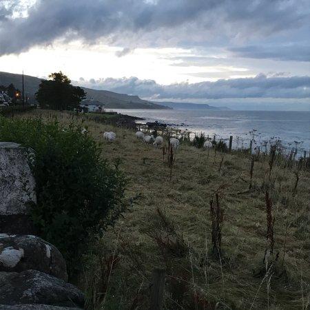 Ballygally Beach: photo3.jpg