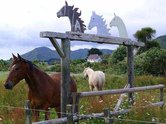 Ahipara, Νέα Ζηλανδία: Horses everywhere