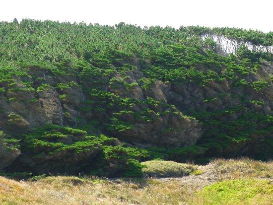 Ahipara, Νέα Ζηλανδία: Behind the beach