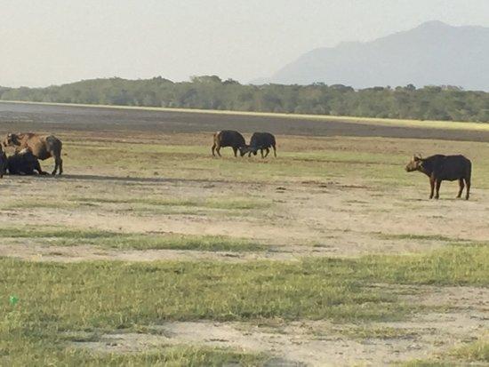 Lake Manyara National Park照片
