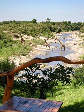 Rekero Camp, Asilia Africa: Afternoon visitors!