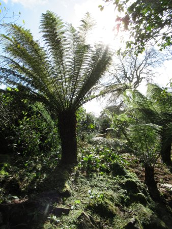 St Austell, UK: palms