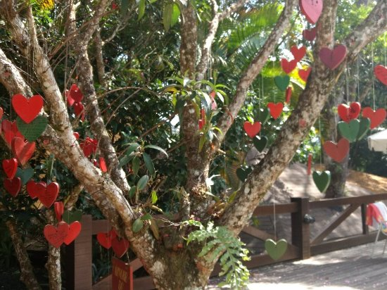 Urikana Boutique Hotel: Natureza e energia! ☘️