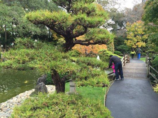 San Mateo, كاليفورنيا: Japanese Tea Garden